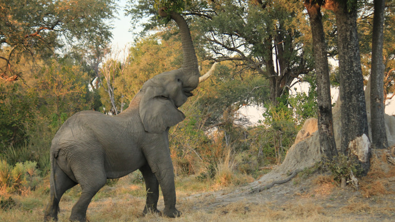 Ein Elefant unter einem Baum