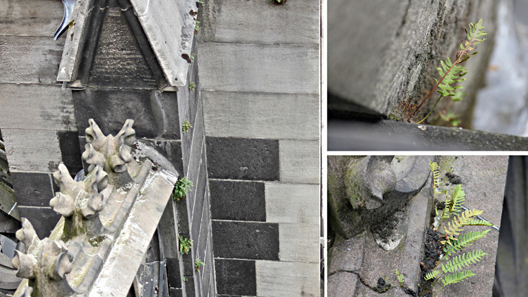 Eine Collage aus drei Fotos. Darauf sind einzelne Stellen des doms