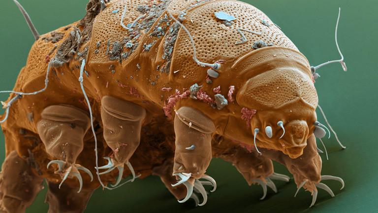 Eine Mikrobe mit acht Beinen und einer Art Panzer. Erinnert an einen Bär. Gehört zur Ausstellung im Mikrobenzoo.