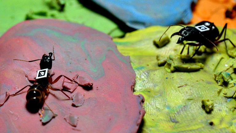 Zwei Ameisen kleben noch im farbigen Knet fest und tragen einen QR-Code auf dem Rücken.