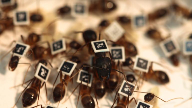 Ameisen mit QR-Code auf dem Rücken