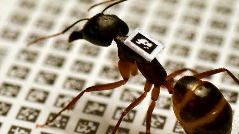 Eine Ameise mit QR-Code auf dem Rücken
