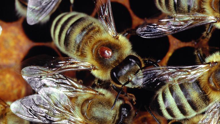 Flugverspätung durch Bienenschwarm