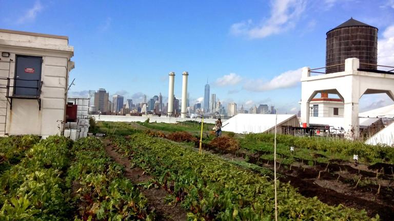 Eine Dachfarm in New York mit Blick auf die Skyline