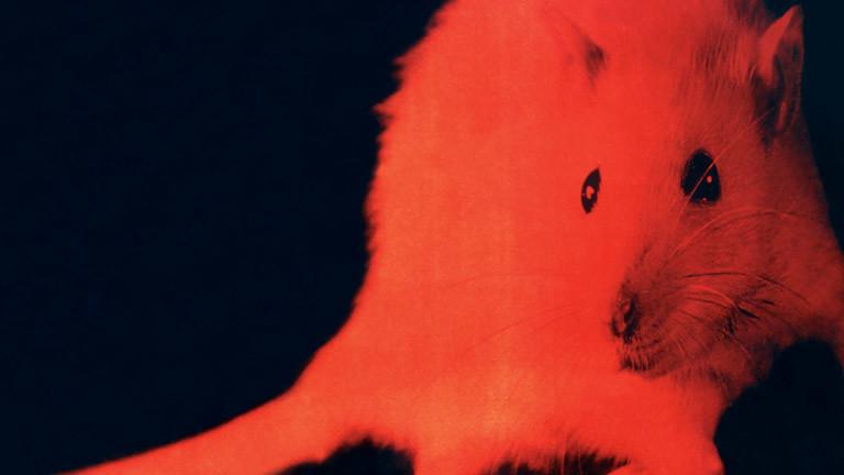 Maus mit rotem Farbeffekt