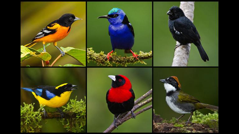 Verschiedene Vögel mit buntem Gefieder zur Darstellung der Diversität