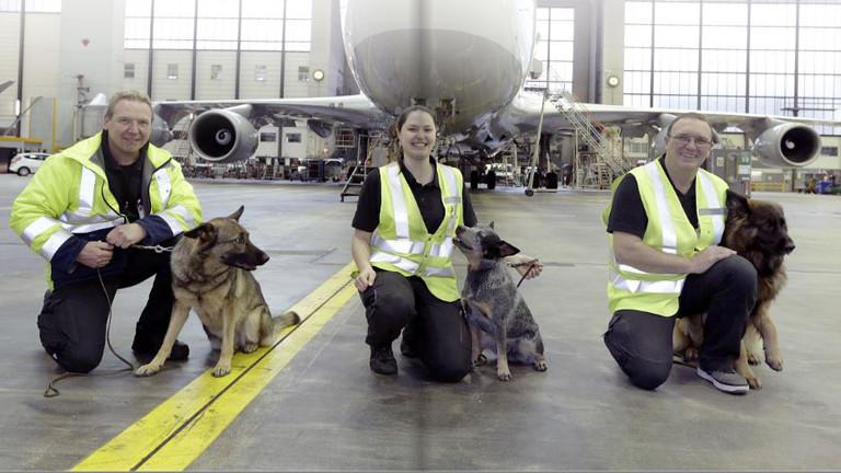 Drei Hunde, die am Frankfurter Flughafen gegen Bettwanzen im Einsatz sind.