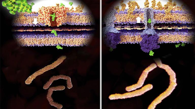 Antibiotikaresistenz: Abbildung links: Ein Antibiotikum dringt durch die Bakterienwand. Abbildung rechts: Bakterien haben eine Resistenz entwickelt.