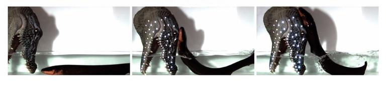 Beispiel wie der Aal aus dem Wasser herausschnellt, um einen vermeintlichen Räuber abzuwehren. Die LED-Leuchten beginnen durch die Stromschläge des Aals über einen leitenden Kohlenstoffstreifen an der Attrappe zu leuchten.