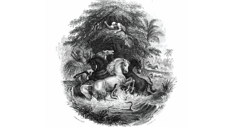 Eine Zeichnung aus dem März 1800, wie Alexander von Humboldt den Kampf von Pferden gegen Aale beobachtet hat. Veröffentlicht wurde sie 1843 im The Naturalist Library, Ichthyology, Volume V, Part II, um die Beschreibung der Fische in Guiana von Robert H. Schomburgk zu illustrieren.