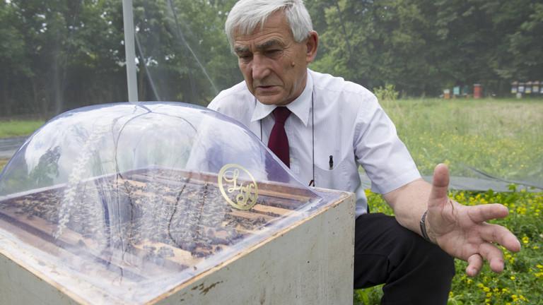 Professor Nikola Kezic von der Universität Zagreb erforscht, ob Bienen Minen aufspüren können.