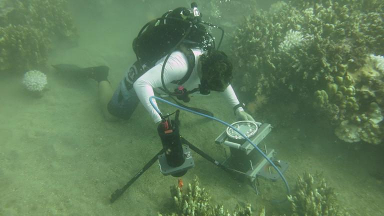 Forscher filmt unter Wasser die Bewegung der Korallen