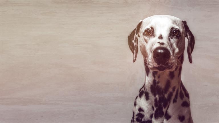 Was sagt uns der Hundeblick?