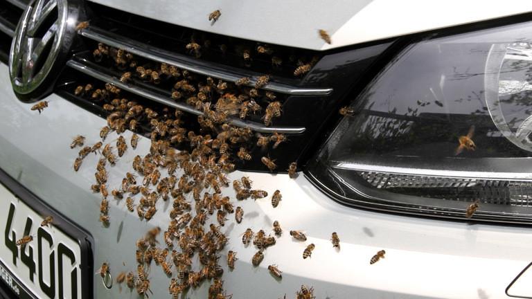 Bienen.