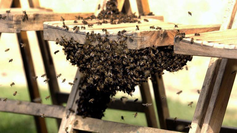 Bienen auf einem Klappstuhl in Windsor Castle.