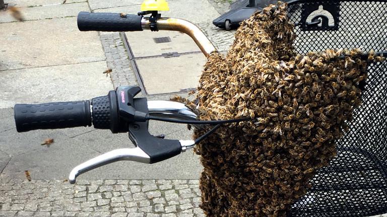 Bienen auf einem Fahrrad.