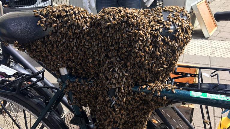 Ein Fahrradsattel, auf dem sich Bienen niedergelassen haben.