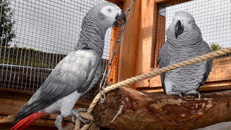 Partnervermittlung papageien
