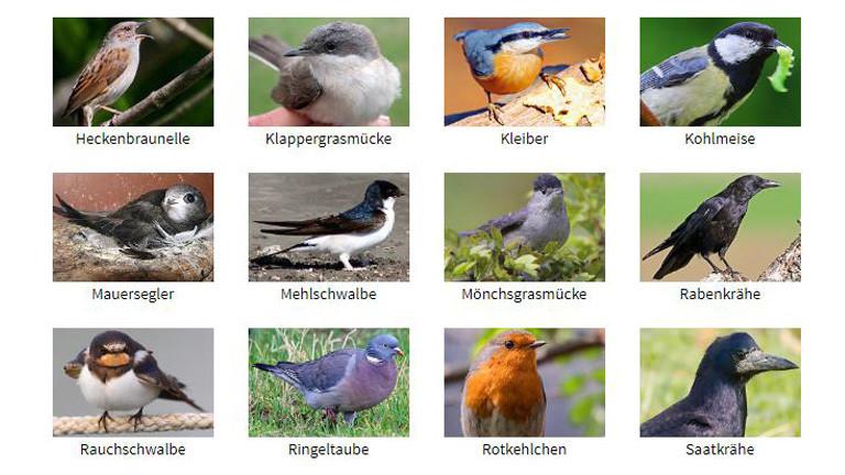 Ausschnitt aus der Übersicht der häufigsten Gartenvögel.
