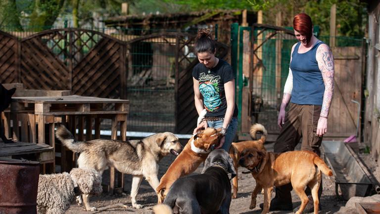Vanessa Bokr mit ihren Hunden auf der Hellhound Foundation