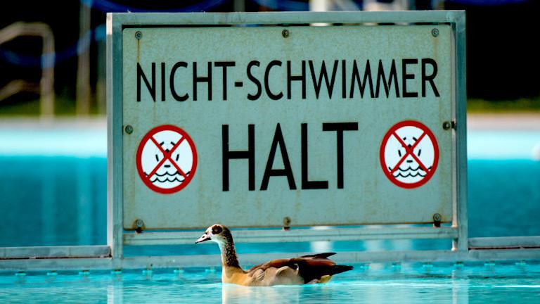 Eine Nilgans schwimmt im Schwimmbecken eines öffentlichen Schwimmbades.
