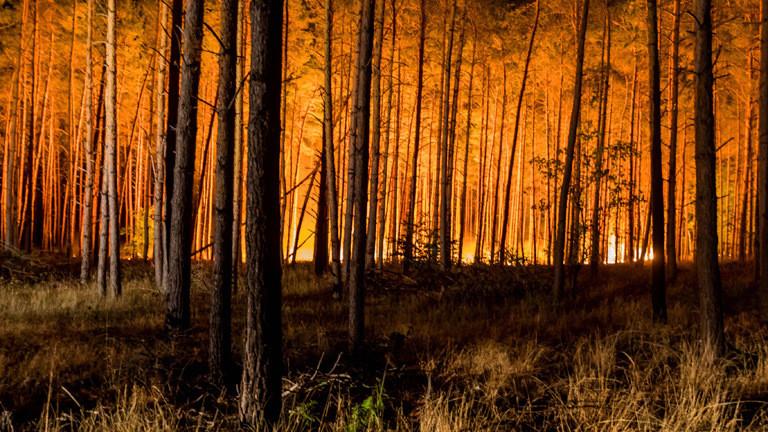 Waldbrände sind häufiger geworden