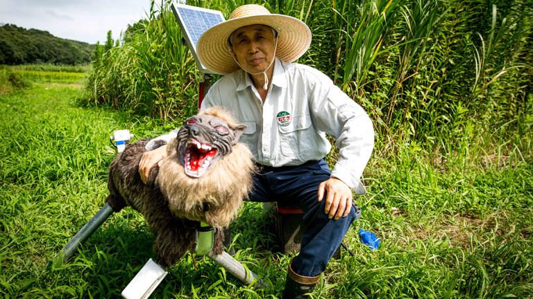 Chikao Umezawa, Vorsitzender des Agrarverbandes in der Stadt Kisarazu