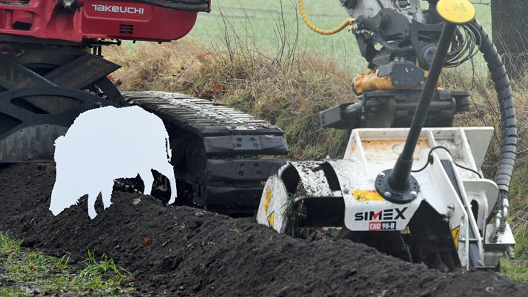 Afrikanische Schweinepest Danemark Baut Wildschweinzaun Dlf Nova