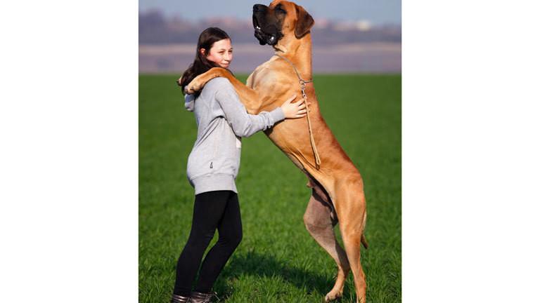Riesenhund mit Frauchen