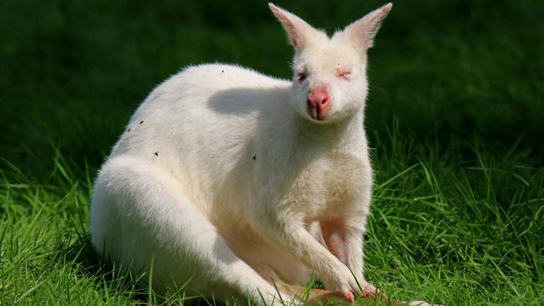 Albinismus Albino Tiere Haben Es Schwer Dlf Nova
