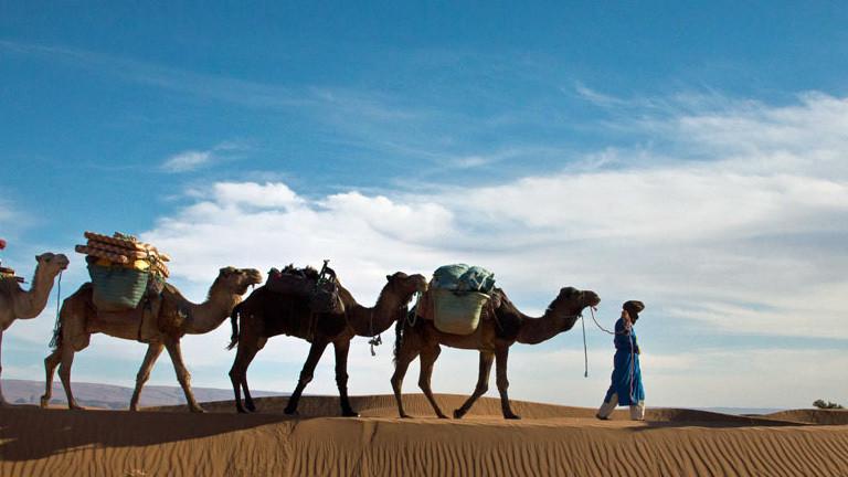 Kamele auf einer Tour durch die Wüste.