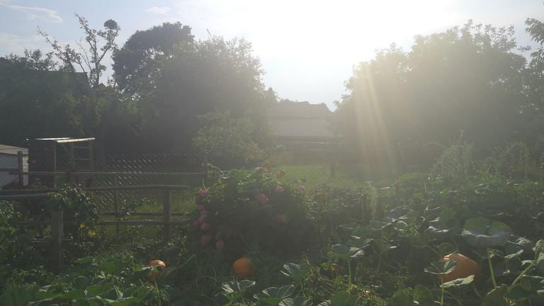 Der Garten von Tino Hütter.
