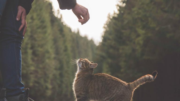 Eine Katze wird auf der Straße gefüttert.