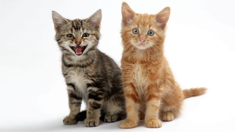 Was Katzen uns sagen wollen