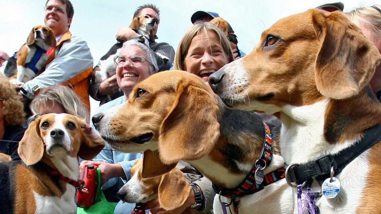 Ehemalige Versuchstier-Beagle und ihre Besitzer.