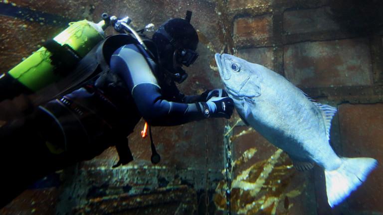 Ein Taucher und ein Fisch in einem Aquarium.