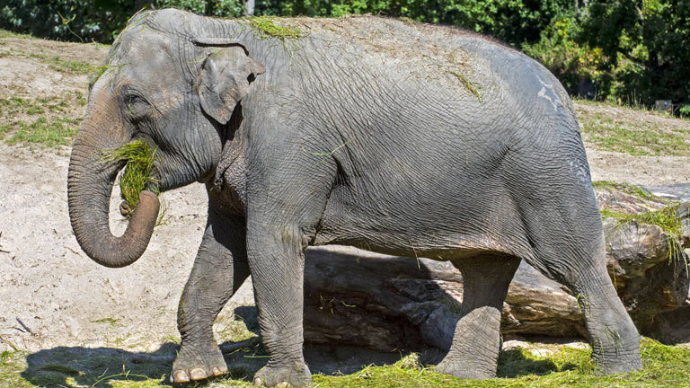 Gewicht baby elefant