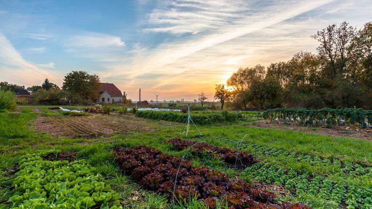 Öko-Bauernhof von Johannes und Laura in Mecklenburg-Vorpommern