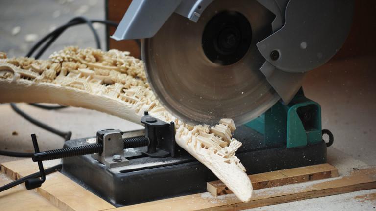 Beschlagtnahmte Kunst aus Elfenbein wird zersägt