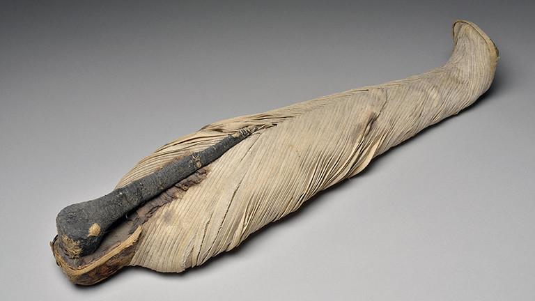 Eine Ibis-Mumie aus der Ptolemäischen Dynastie
