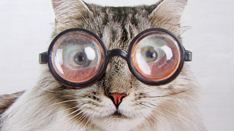 Tussi Mit Brille Missbraucht Einen Dildo
