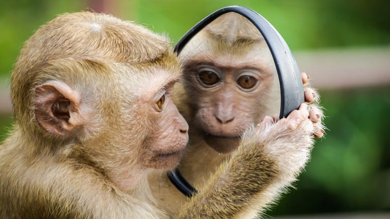 Ein Affe schaut sich im Spiegel an