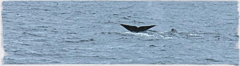 Anky sichtet einen Wal
