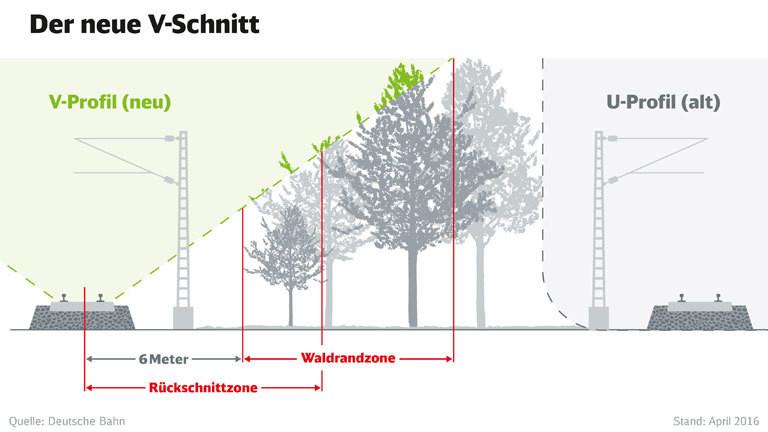 Grafik von der Deutschen Bahn, wie sie Bäume an Trassen beschneidet.