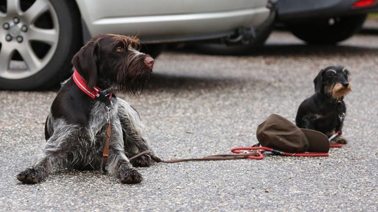 Der Greysterhund Balou