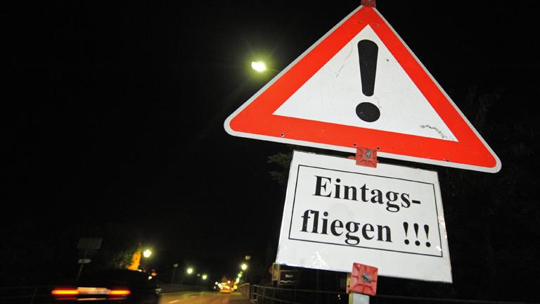 Schild mit Warnung vor Eintagsfliegen