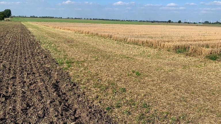 Das Feld der Gerhardys mit der Einteilung für ein Hamsterschutzprojekt.