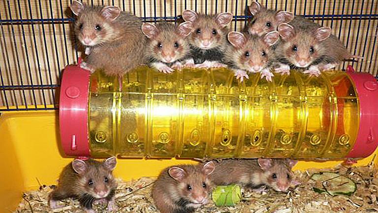 Hamsterzuchtstation
