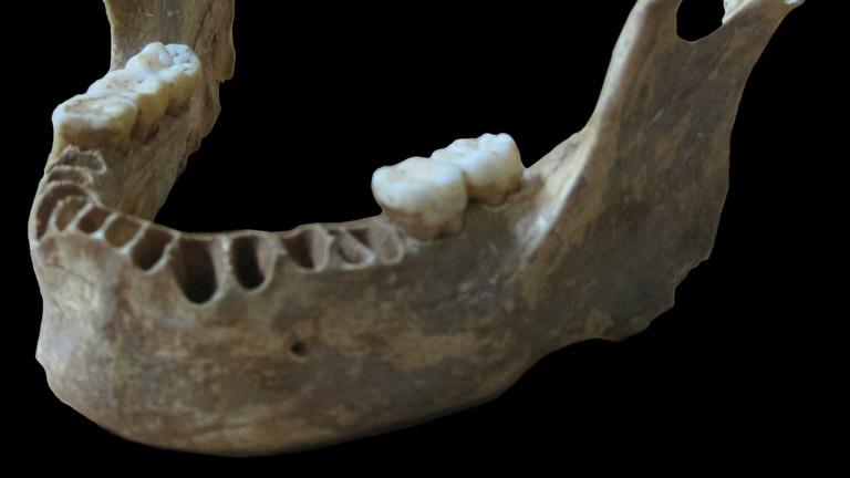Der Kiefer aus der Karpartenhöhle