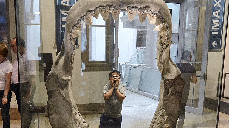 A child visiting the reopened National Museum of Natural History looks at a giant great white shark mouth on display at the museum in Washington DC, USA, 17 October 2013. Furloughed workers returned to work and national parks reopened after a bipartisan deal was passed in the Senate and House that ended the sixteen-day-old partial shutdown of the federal government. EPA/MICHAEL REYNOLDS